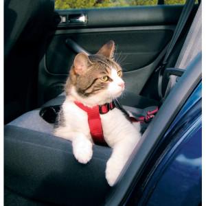 sikkerhedssele til kat
