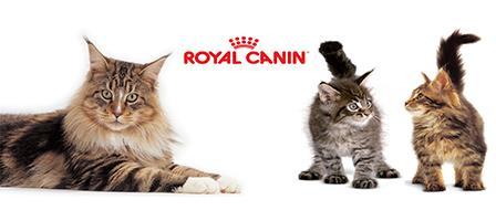 Royal canin kattemad