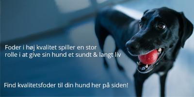 Hundefoder i bedste kvalitet